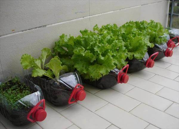 Grow Green Plants in Plastic Bottles How to make things from plastic bottles