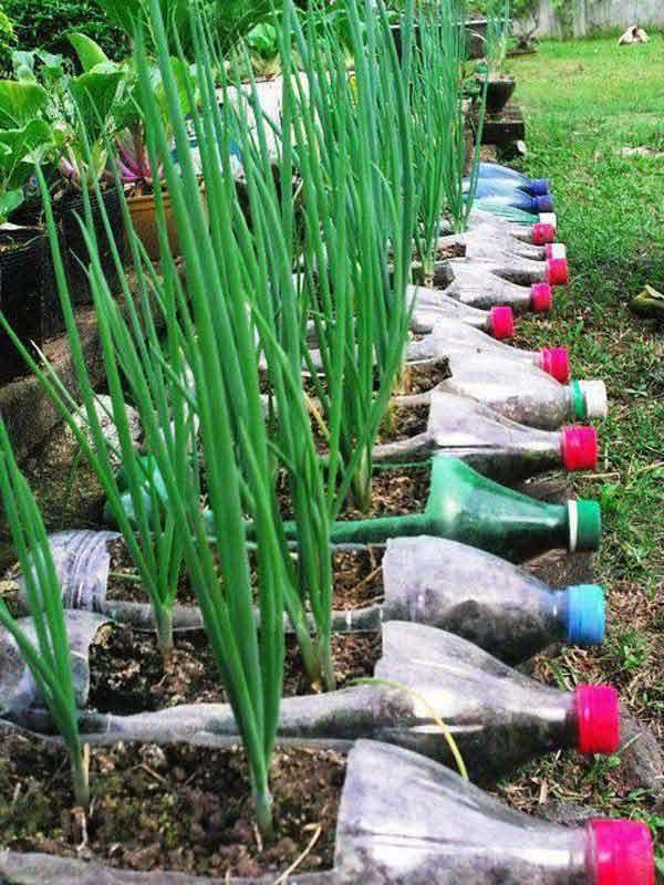 Grow Vegetables in Plastic Bottles How to make things from plastic bottles