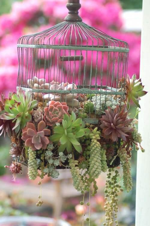 The La-La Land : Recycled Bird Cage Planter Idea