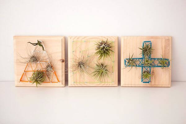 Air Plant String Art DIY String Art Ideas for Home Decoration