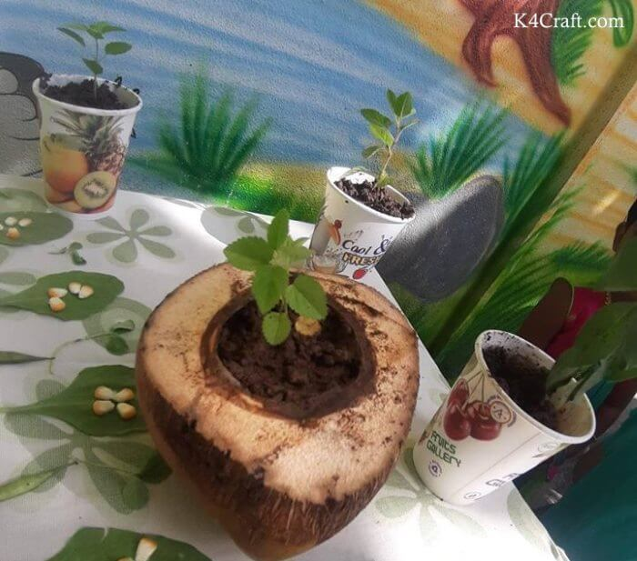 Green day crafts for kids, toddlers, preschool - Plant Inside Coconut And Juice Cup